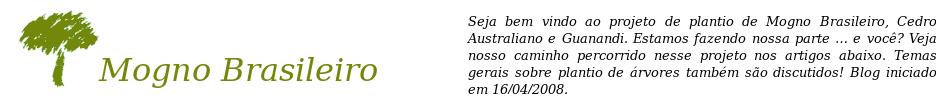 Mogno Brasileiro