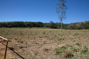Terreno seco, mas as mudas estão ótimas!
